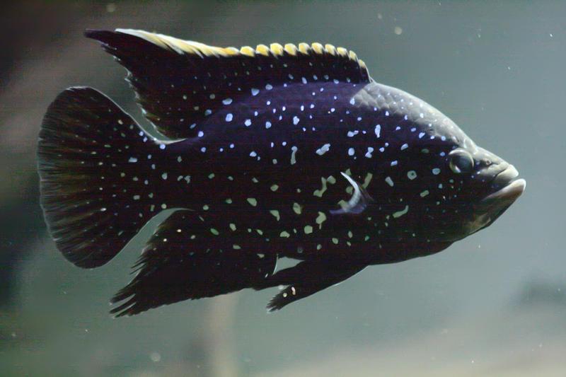 Aquatic Life 8 by Drezdany-stocks