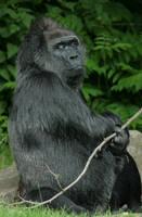 monkey 8 by Drezdany-stocks