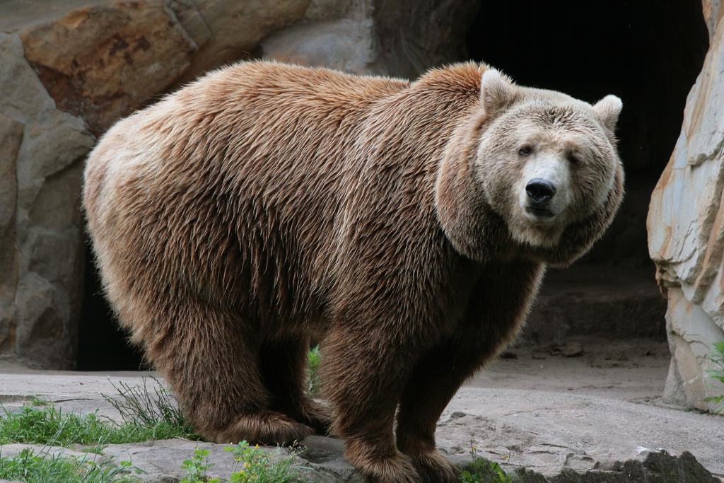 bear 5 by Drezdany-stocks