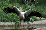 stork 3