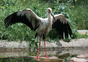 stork 5 by Drezdany-stocks
