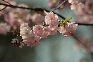 Harbinger of Spring by Drezdany-stocks