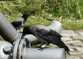 raven 1 by Drezdany-stocks