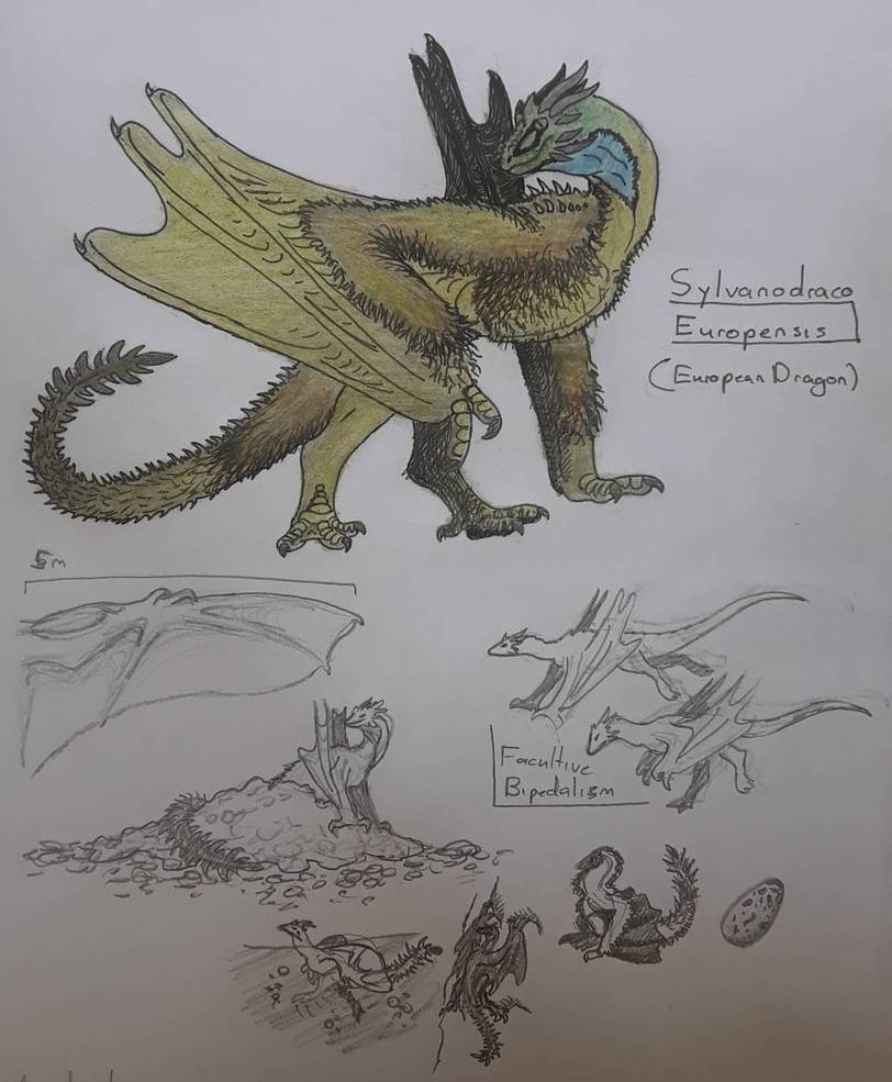Spec Sunday - European Dragon