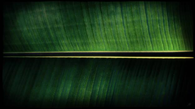 Bihind Bijao Leaf