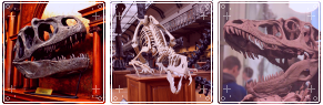extinct____divider_by_kh0njin-db8xtak.png
