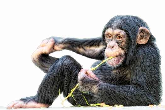 Cheeky monkey colour