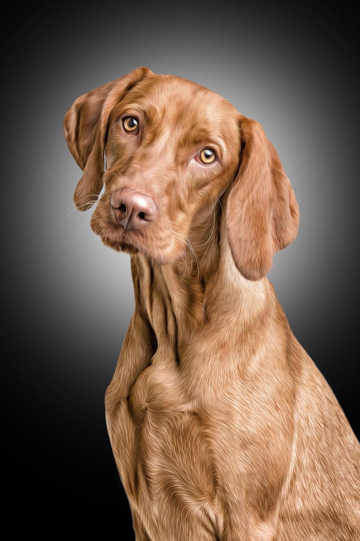 Vizsla Dog by ditney