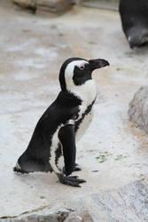 Penguin (jackass)
