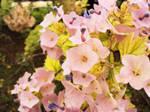 Pink Flower Blooms