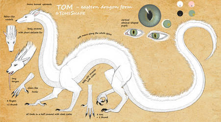 Tom as eastern dragon - reference