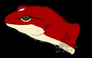 Anna as Leopard Gecko
