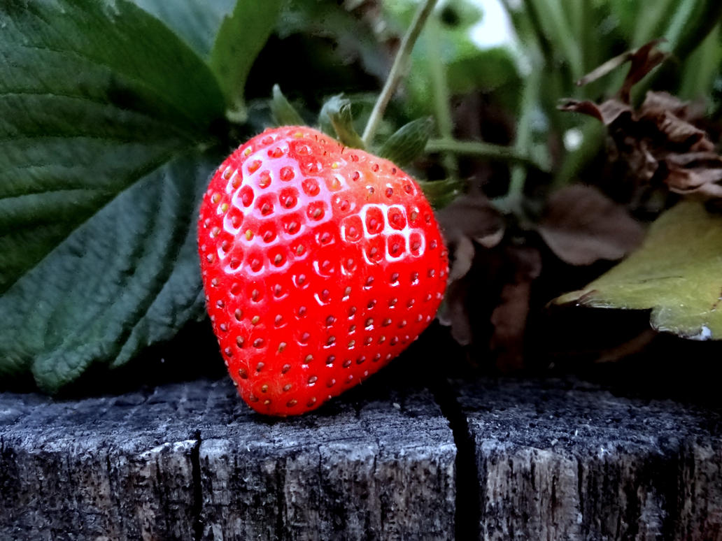 Lonely strawberry by Aroha-Photography