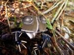 Robot Frog v1