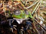 Robot Frog v2