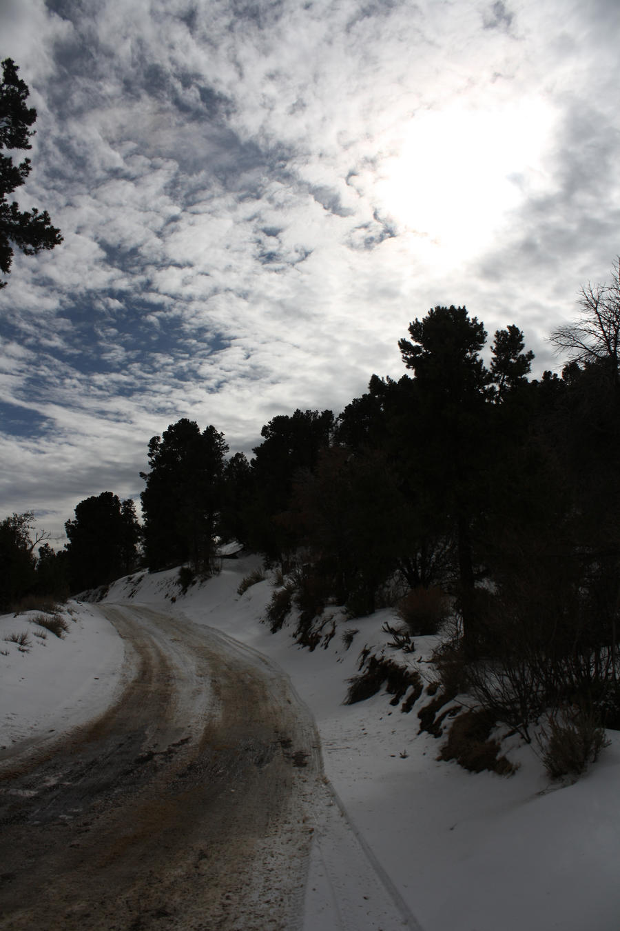 The Snowy Road