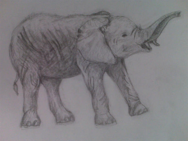 Calf Elephant Sketch b...