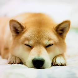 Tired by marustagram