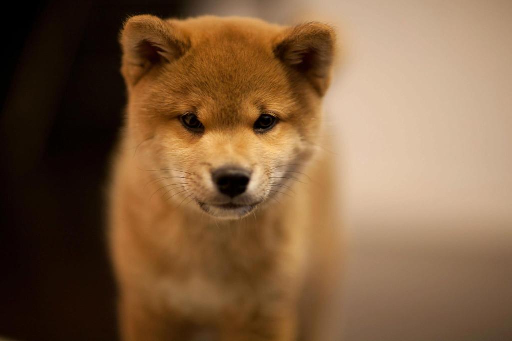 Puppy Days by marustagram