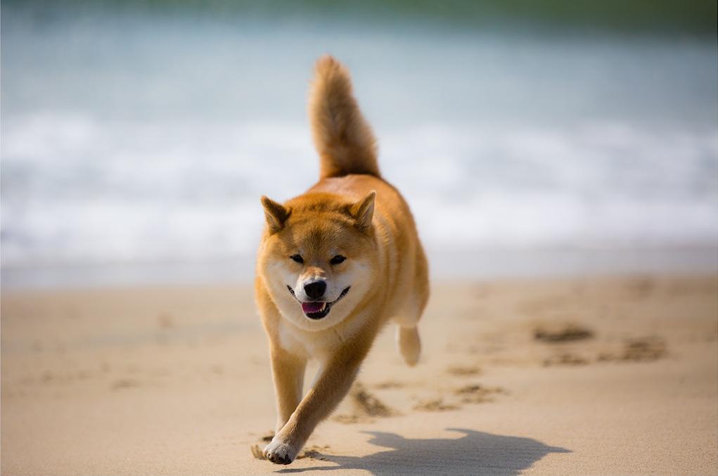Beach Boy by marustagram