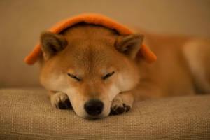 Orange by marustagram