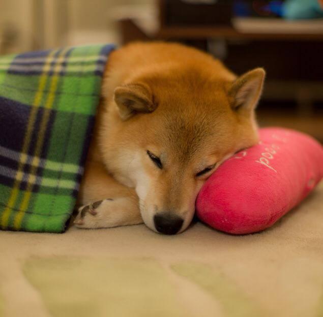 Pillow pet by marustagram