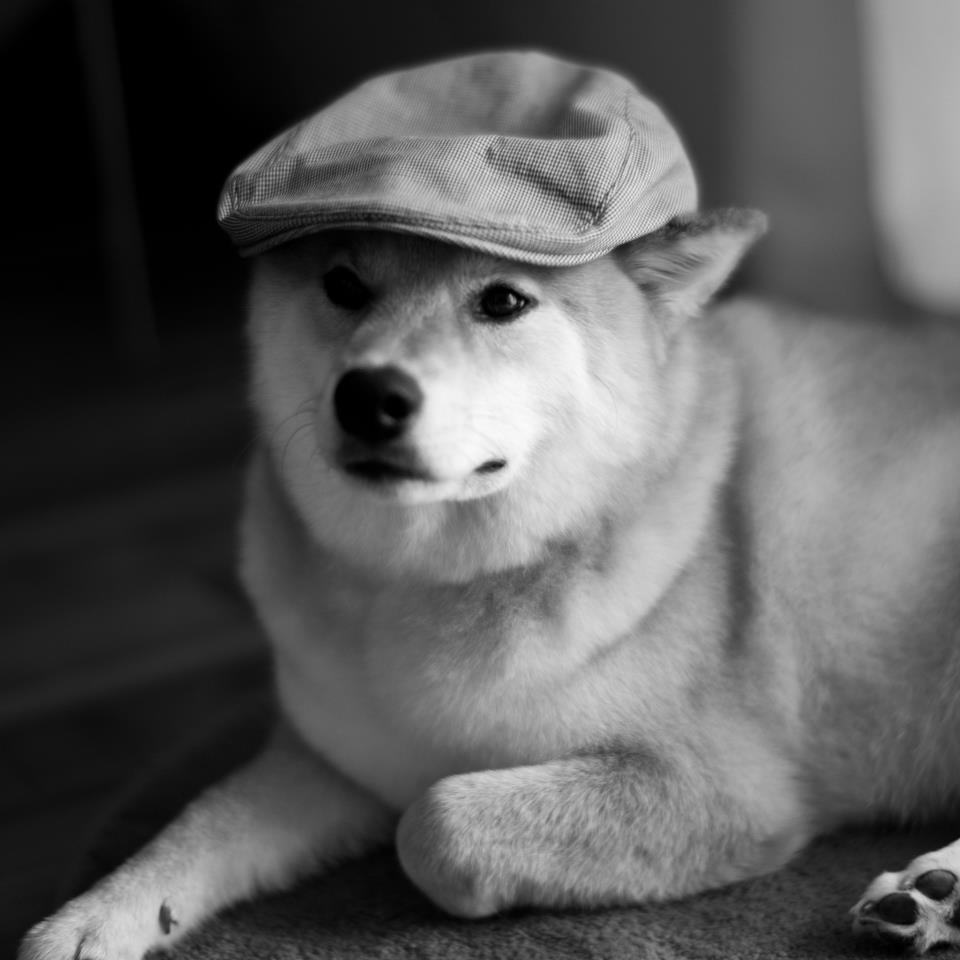 Inspector Shibe by marustagram