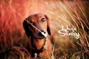 Uncle Slinky Dachshund by uncleslinky