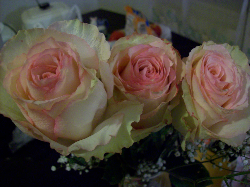 3 Roses by diva42