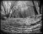 The half lit path