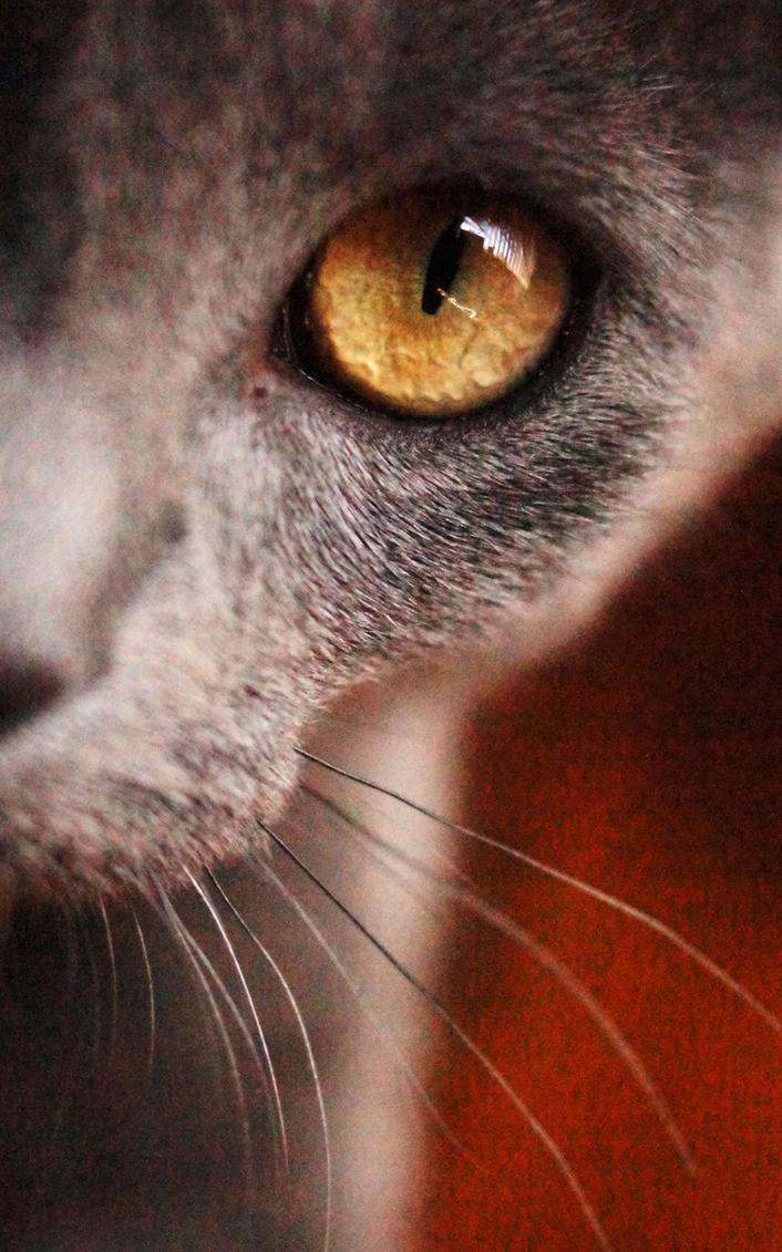 meow. by Rawr-works