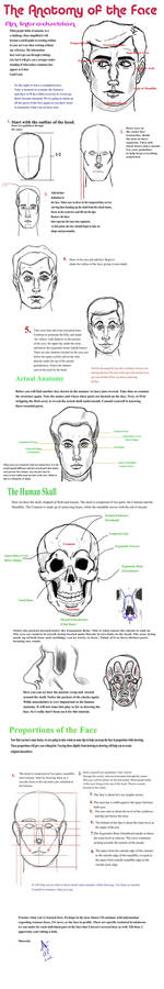 Intro to Anatomy_Face