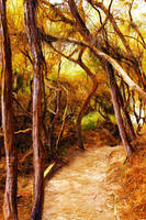 Walk in a forest by Vi9ati