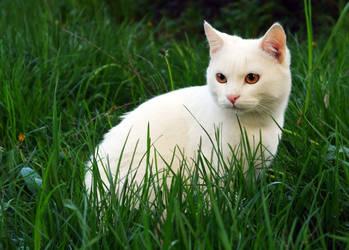 White Cat by Pr1ot