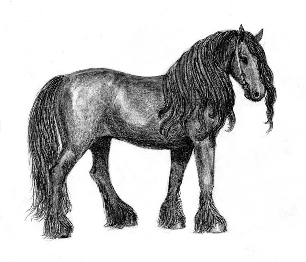 Friesian Head Drawing Friesian Horse Drawings