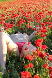 Poppy by NetSeawolf