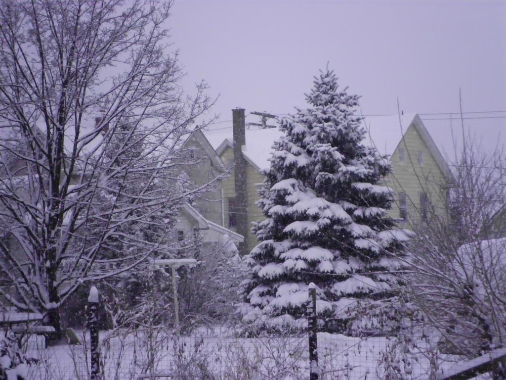 Snowy Tree 2 by lady-warrior
