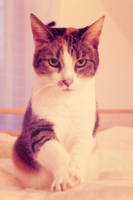 Meow. by LouCrow