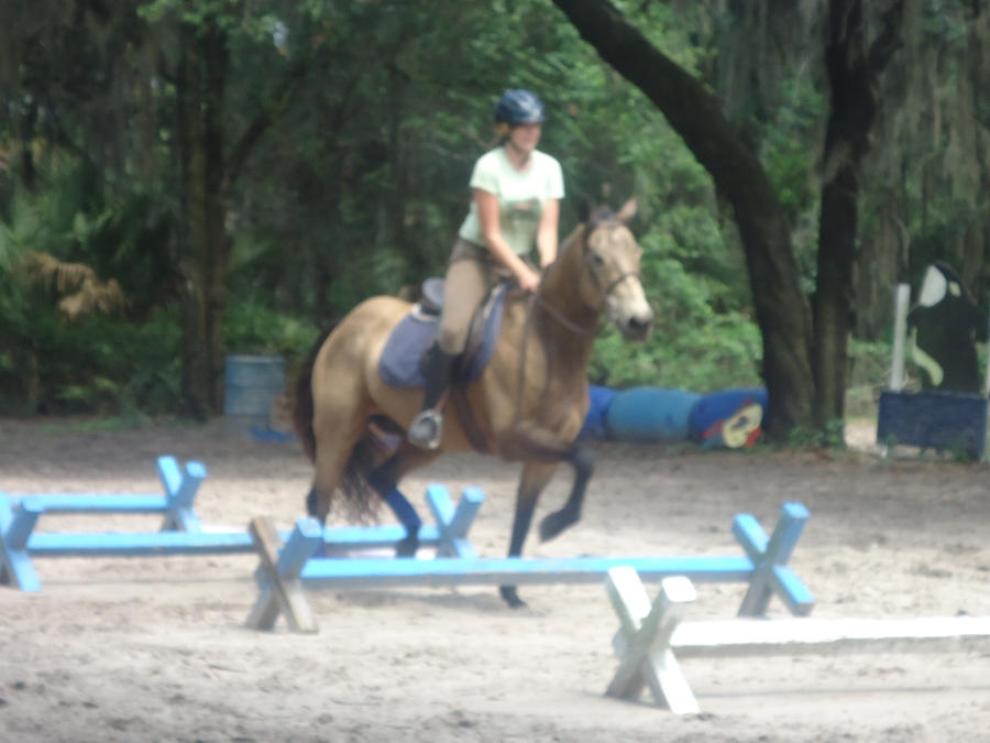 Prince Over Trotting Poles by musicismylife78