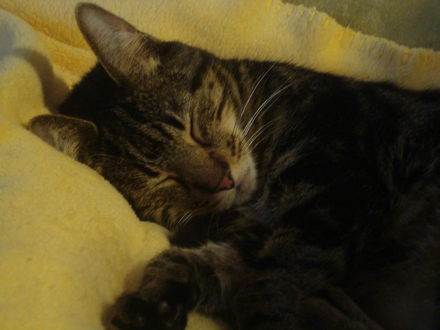 Thomas Sleeping by musicismylife78