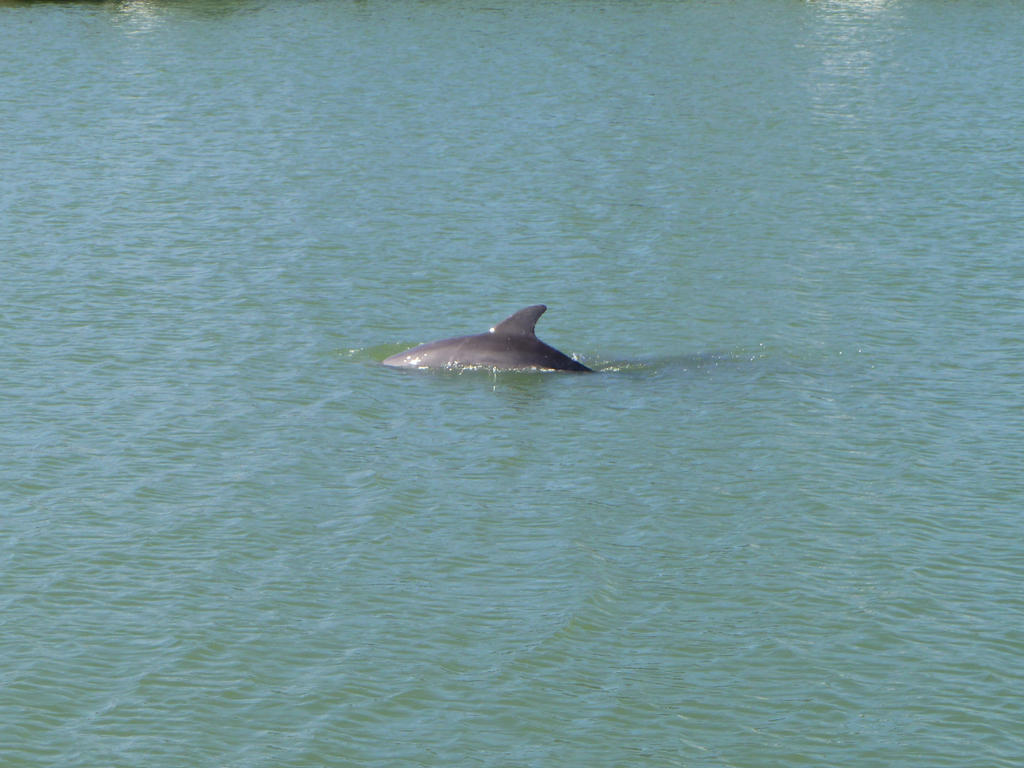 Dolphin! by musicismylife78