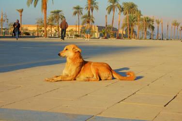 Karnak Temple 8 Sphinxy Dog by mynando