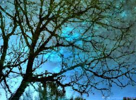 tree's reflection