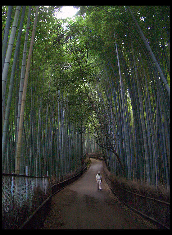 Kyoto by sadato