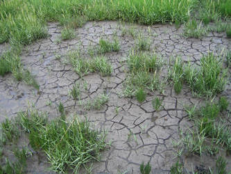 Dried out ground by The-Bardess
