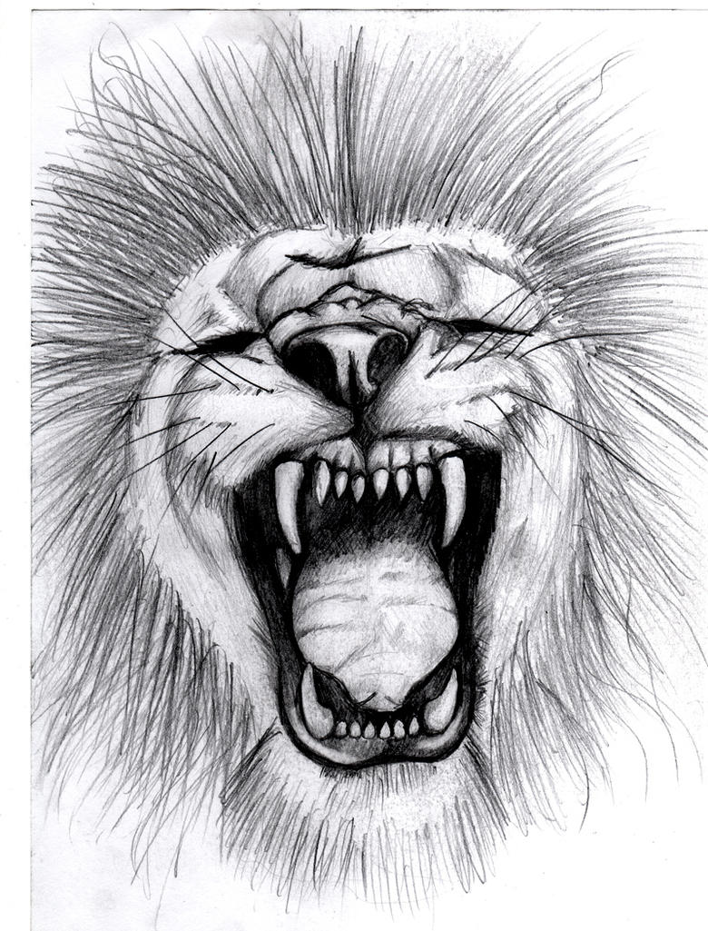 a Lion Roaring by Lion Roaring Drawing