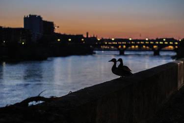 Canards au lever du soleil by PendezMignonne
