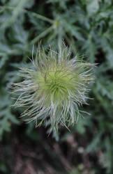 Douce fleur by PendezMignonne