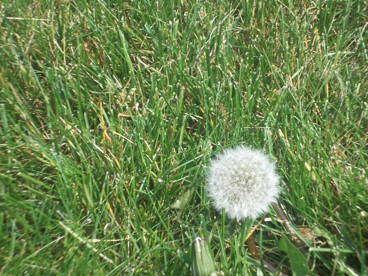 The wish flower by Vereesia on DeviantArt