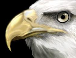 Eagle by Furramon